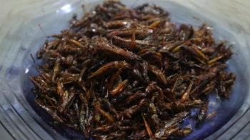 walang belalang goreng enak