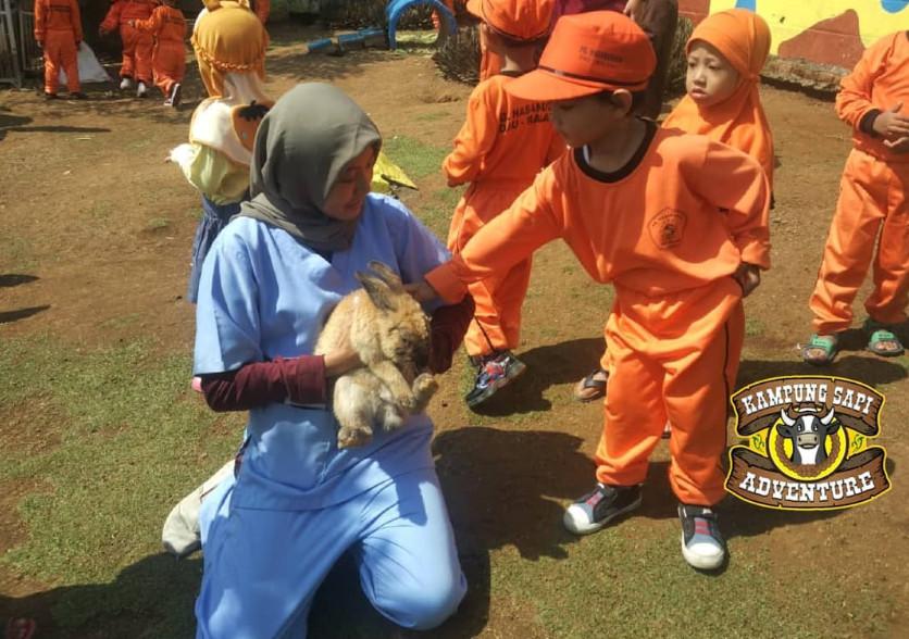 Bermain Bersama Kelinci di Kampung Sapi Adventure Batu Malang