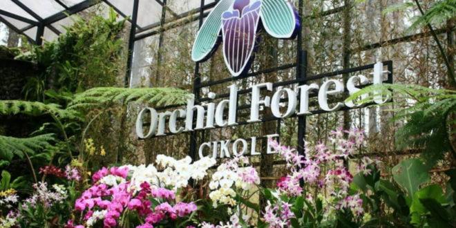 Orchid Forest Lembang, Wisata Instagramable yang Kekinian Banget